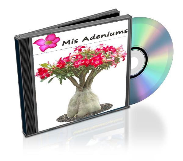 comprar adenium