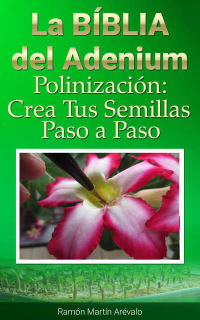 portada-polinizacion-adeniums